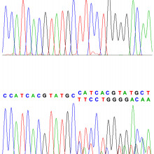 One of the mutation sequences which formed part of the study