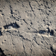 Ancient hominin footprints at the Laetoli site, Tanzania. Credit: Raffaello_Pellizzon