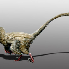 Hesperonychus elizabethae, Late Cretaceous of Canada. Digital.