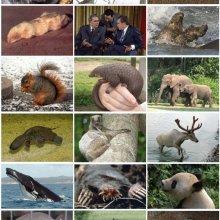 Mammalian diversity