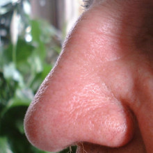 A profile of a beautifully shaped human Nose, from a Belgian male aged 80.