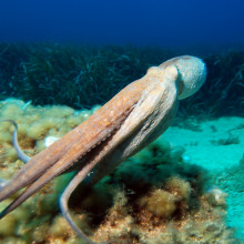An Octopus - but how does it control those tentacles?