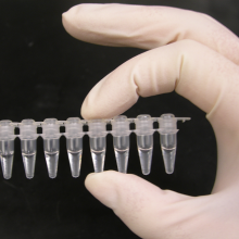 Photo of a strip of Polymerase Chain Reaction (PCR) tubes, each tube contains a 100ul reaction.
