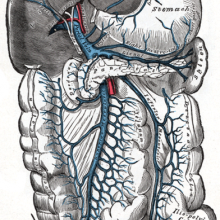 The portal vein and its tributaries. It is formed by the union of the superior mesenteric vein and splenic vein.