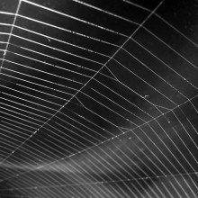 Closeup of spiral orb web