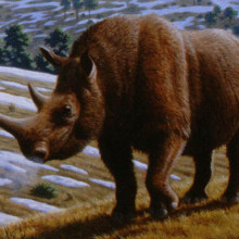 Wooly Rhino