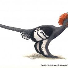 Anchiornis huxleyi reconstruction