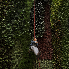 David Attenborough abseiled down the wall of the new conservation campus in Cambridge.