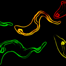 Trypanosomes - the parasite that causes sleeping sickness keeps one step ahead of its host.