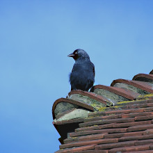 A bird perched on a roof