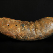 This large fossilized feces specimen is named \The Kraken\.