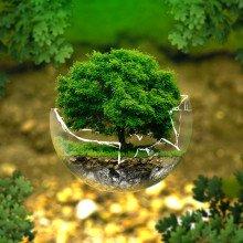 Bonsai tree in a broken glass sphere