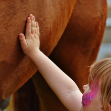 A young girl stroking a horse