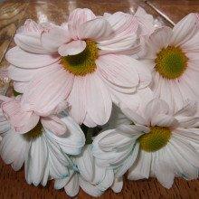 Multicoloured flowers