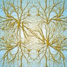Artists illustration of nerve cells (neurones)