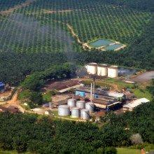 oil plam plantation