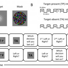 Human observers have optimal introspective access to perceptual processes even for visually masked stimuli
