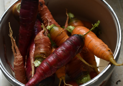Colourful carrots in a mixing bowl