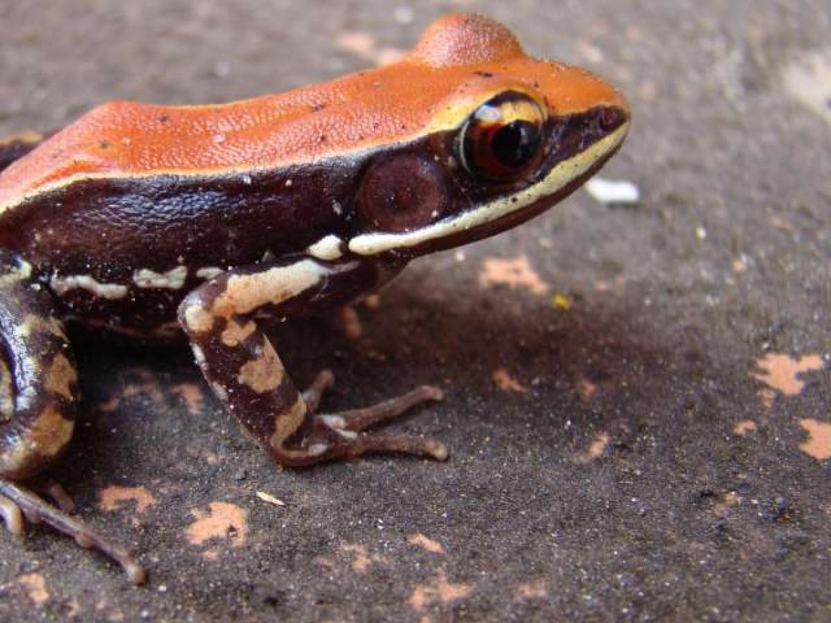 Trouva: Naked Frog Toy